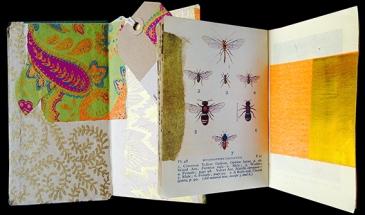 LL-OBSER-Insects_©graciaribalaiga-WEB