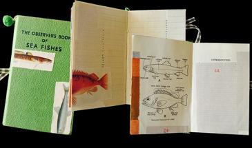 LL-OBSER-SeaFish_©graciaribalaiga-WEB